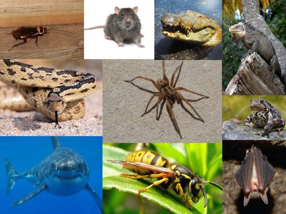 Ces animaux qui nous font peur