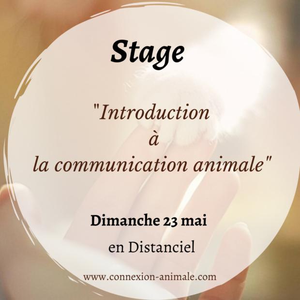 Stage «Introduction à la communication animale» sur Zoom 23 mai 2021