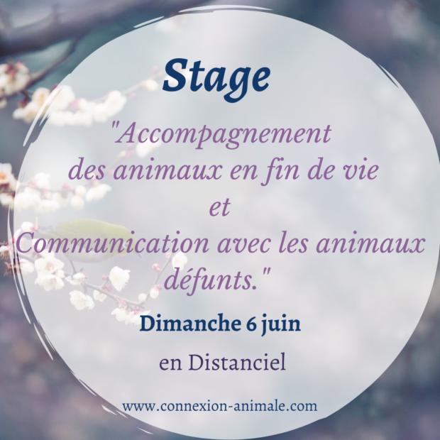 Stage en distanciel «Accompagnement fin de vie et Communication avec les animaux défunts » Dimanche 6 juin