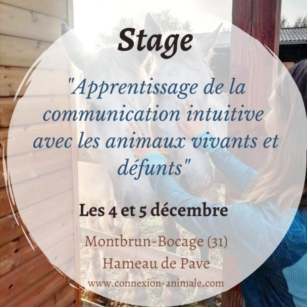 Week-end de Formation Apprentissage Communication Animale 4-5 déc 2021 (Haute-Garonne, 31)