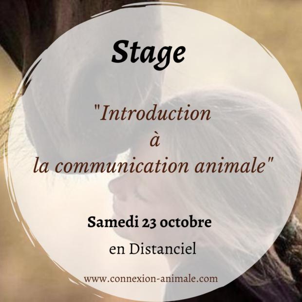 Stage en distanciel «Introduction à la communication animale » Samedi 23 octobre