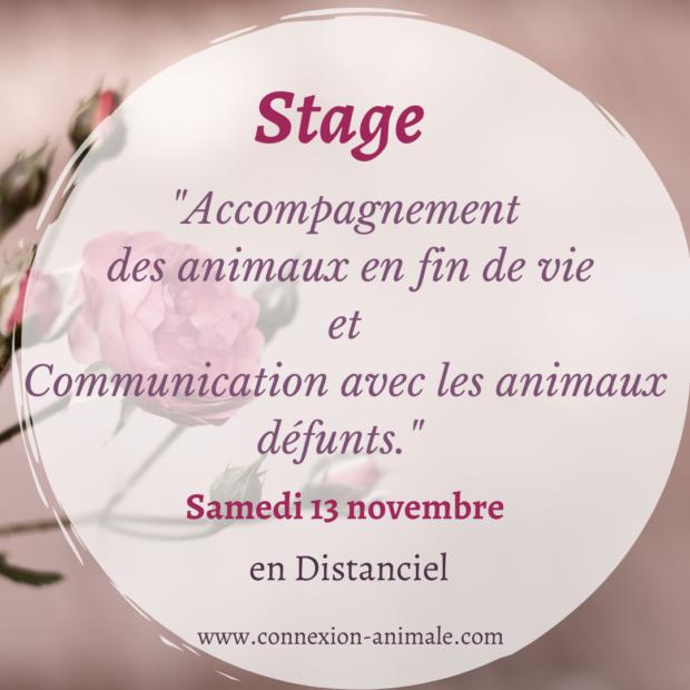 Stage en distanciel «Accompagnement fin de vie et Communication avec les animaux défunts » Samedi 13 novembre